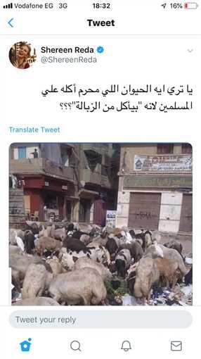 أسرف عبد الباقي
