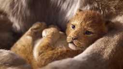 70 ألف شخص يوقعون عريضة ضد Disney بسبب The Lion King