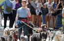 دانيال رادكليف يتجول بـ 8 كلاب في شوارع نيويورك