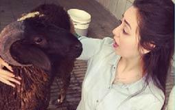 هبة مجدي نشرت صورة لها مع الخروف، ويبدو أنها أحبته!