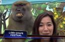 """بالفيديو: """"القرد المتحرش"""" على رأس أكثر المواقف المحرجة للمذيعين في 2013"""