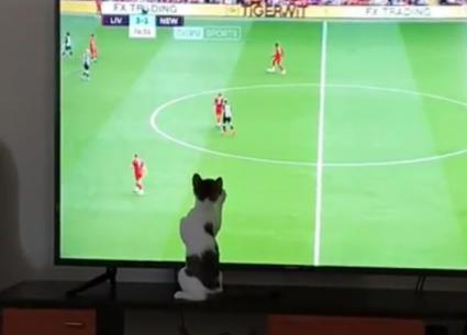 قطة مصطفى خاطر تتابع مباراة محمد صلاح