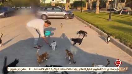 مدحت صالح يعلق على فيديو إطعامه قطط الشارع